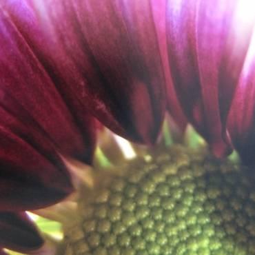 Flower-pict-for-web-e1488688746126.jpg